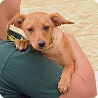 Adopt A Pet :: Cleo - Palmdale, CA