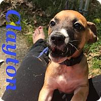 Adopt A Pet :: Clayton - Gainesville, GA