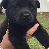 Adopt A Pet :: Totty - Albany, NY