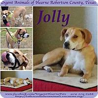 Adopt A Pet :: Jolly - Hearne, TX