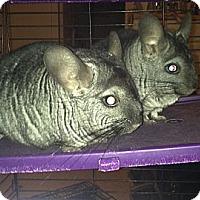Adopt A Pet :: Fric & Frac - Granby, CT