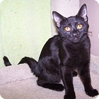Adopt A Pet :: K-RonB5-Daphne - Colorado Springs, CO