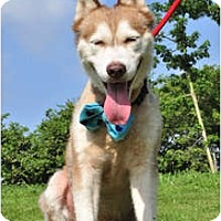 Adopt A Pet :: Alaska - Pending - Vancouver, BC
