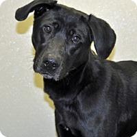 Adopt A Pet :: Jack - Port Washington, NY