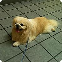 Adopt A Pet :: Dude--(Portland,ME) - Vansant, VA
