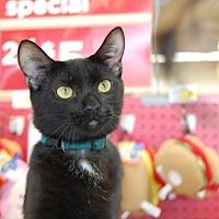Adopt A Pet :: Samuel L. Catson - Memphis, TN