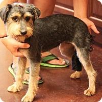 Adopt A Pet :: *Effie - PENDING - Westport, CT