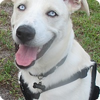 Adopt A Pet :: Polar - Jacksonville, FL