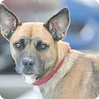 Adopt A Pet :: Laney - Ormond Beach, FL