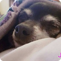 Adopt A Pet :: Jelly - Georgetown, KY