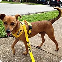 Adopt A Pet :: Casey - Russellville, KY