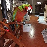 Adopt A Pet :: Ozzy - Sylmar, CA