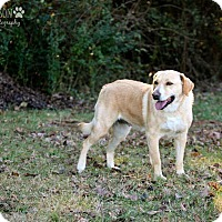 Adopt A Pet :: Tizzy - Cashiers, NC