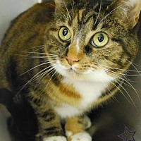 Adopt A Pet :: Tinkerbell - Island Heights, NJ