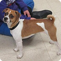 Adopt A Pet :: Penelope - Rootstown, OH