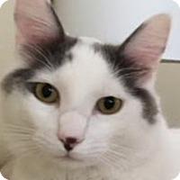 Adopt A Pet :: Cupid - LaJolla, CA