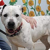 Adopt A Pet :: Dottie - Elyria, OH