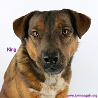 Adopt A Pet :: King - Needs Foster - Bloomington, MN