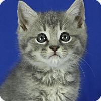 Adopt A Pet :: Roger - Winston-Salem, NC