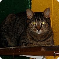 Adopt A Pet :: Fancy - Salem, WV