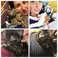 Adopt A Pet :: Sweetest Babies Frank, Phoebe, Piper & Chapstick - Brooklyn, NY