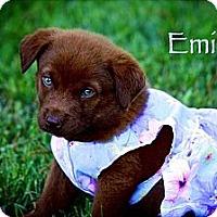 Adopt A Pet :: Emily - Albany, NY