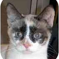 Adopt A Pet :: London - Arlington, VA