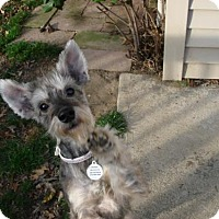 Adopt A Pet :: Trinity - Beachwood, OH