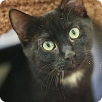 Adopt A Pet :: Rocco - Canoga Park, CA