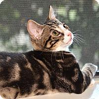 Adopt A Pet :: Channing - Davis, CA