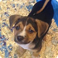 Adopt A Pet :: LUCY LITTER #1 - Pompton Lakes, NJ