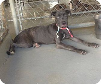 Terrier (Unknown Type, Medium) Mix Dog for adoption in Livingston Parish, Louisiana - Genie