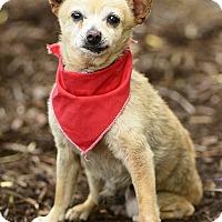 Adopt A Pet :: Binky - Rancho Palos Verdes, CA
