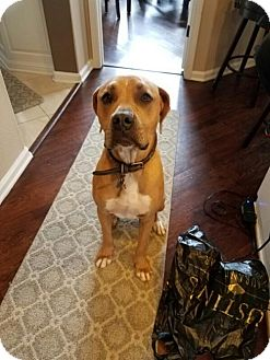 Boxer Mix Dog for adoption in San Jose, California - Roxy