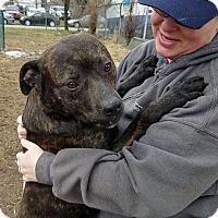 Adopt A Pet :: Braveheart - Troy, MI