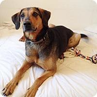 Adopt A Pet :: JR - Hamilton, ON