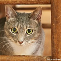 Adopt A Pet :: Boo - Homewood, AL