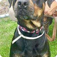 Adopt A Pet :: Cliff - West Palm Beach, FL