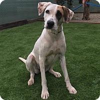 Adopt A Pet :: Lucy Lu - Temecula, CA