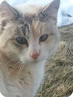 Domestic Shorthair Cat for adoption in Ogden, Utah - Feral Cats