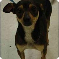 Adopt A Pet :: Otis - Fowler, CA