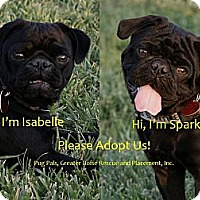 Adopt A Pet :: Sparky - Eagle, ID