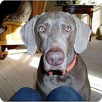 Adopt A Pet :: Roux - Attica, NY