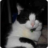 Adopt A Pet :: Milo - Boston, MA