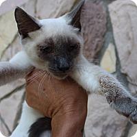 Adopt A Pet :: Imogene - Santa Monica, CA