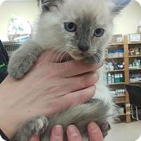 Adopt A Pet :: Tasha - Edmonton, AB