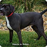 Adopt A Pet :: Jake - Frankfort, IL