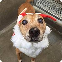 Adopt A Pet :: Rusty **Bonus** - Los Angeles, CA