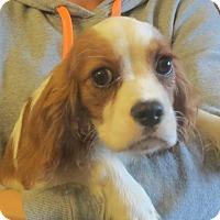 Adopt A Pet :: Jeta - Salem, NH