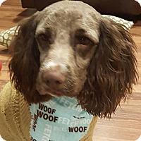 Adopt A Pet :: Frizz - Minot, ND